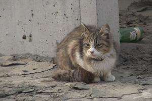 犬と猫と人間と 2動物たちの大震災