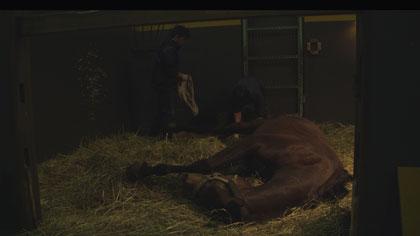 今日もどこかで馬は生まれる