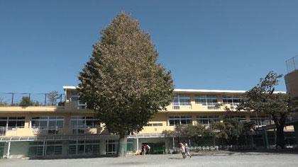 あこがれの空の下~教科書のない小学校の一年~